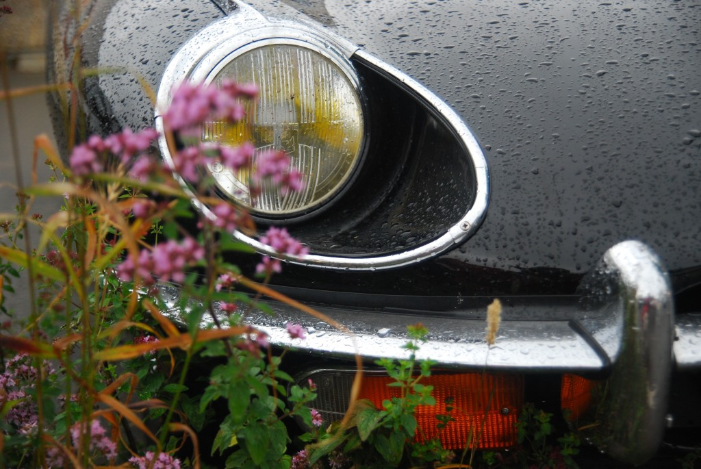 wet front of car flowers